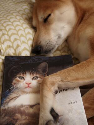 猫とうーちゃん