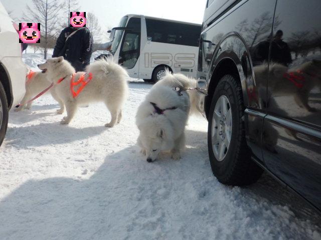2014年2月1日橇練、ほか 006