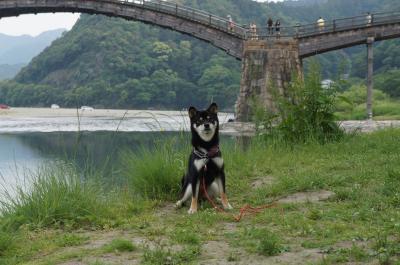 散歩2012.05.30