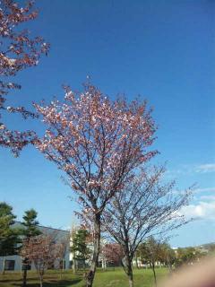2012桜①