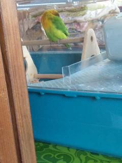 鳥みたい??