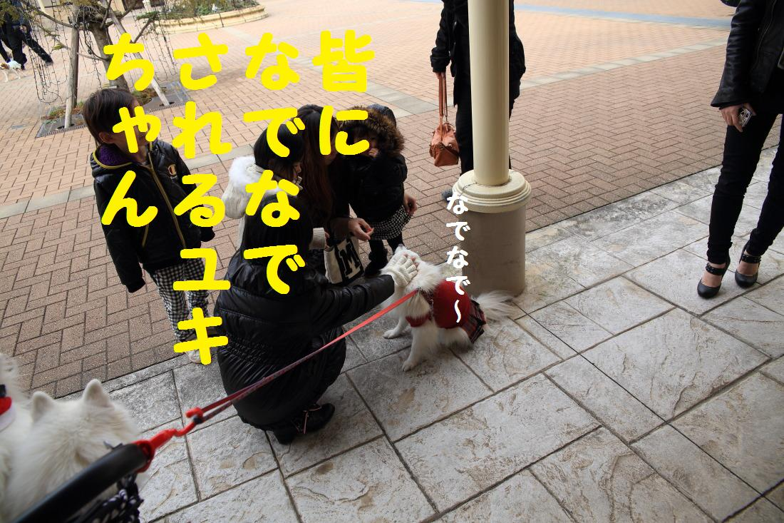 1_20121217160315.jpg