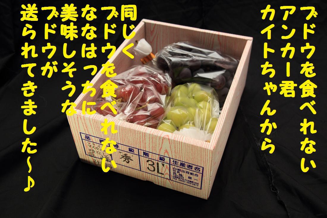 2K5A4642_20120922075303.jpg
