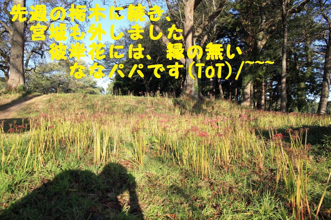 2K5A7706.jpg