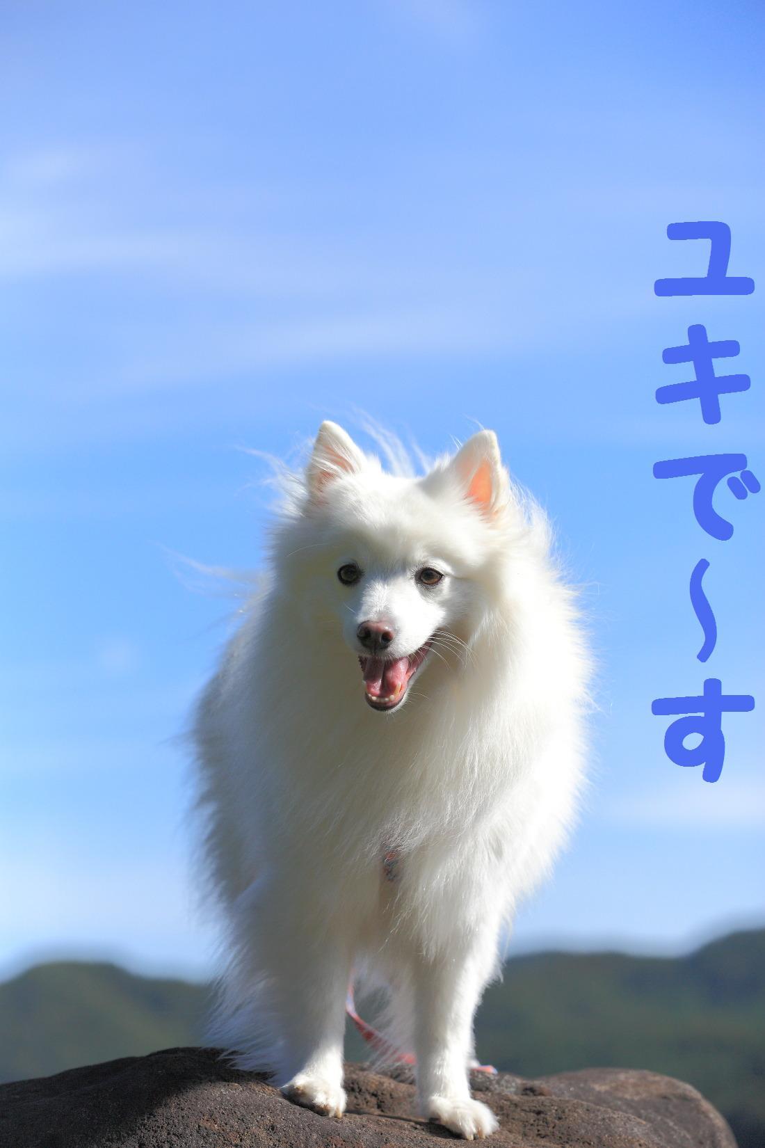 2K5A7883_20121015225505.jpg