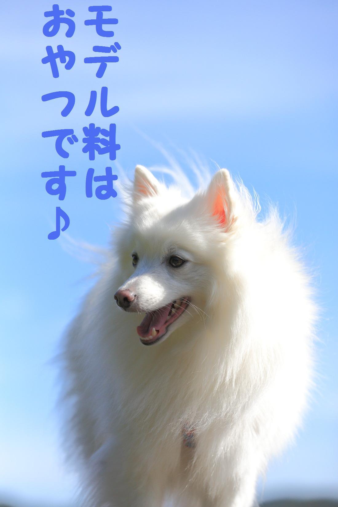 2K5A7885_20121015225505.jpg