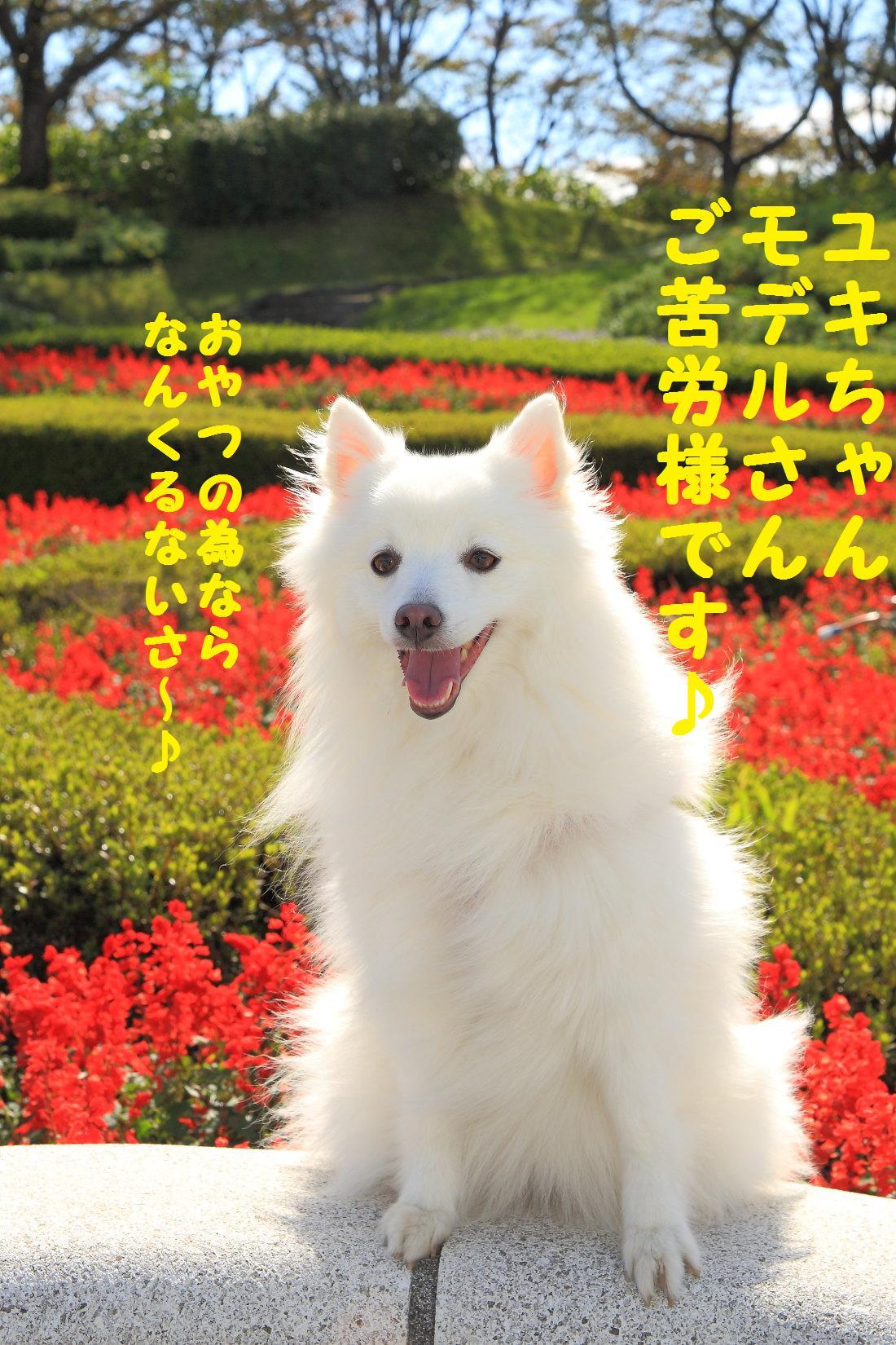 2K5A8080_20121015225503.jpg