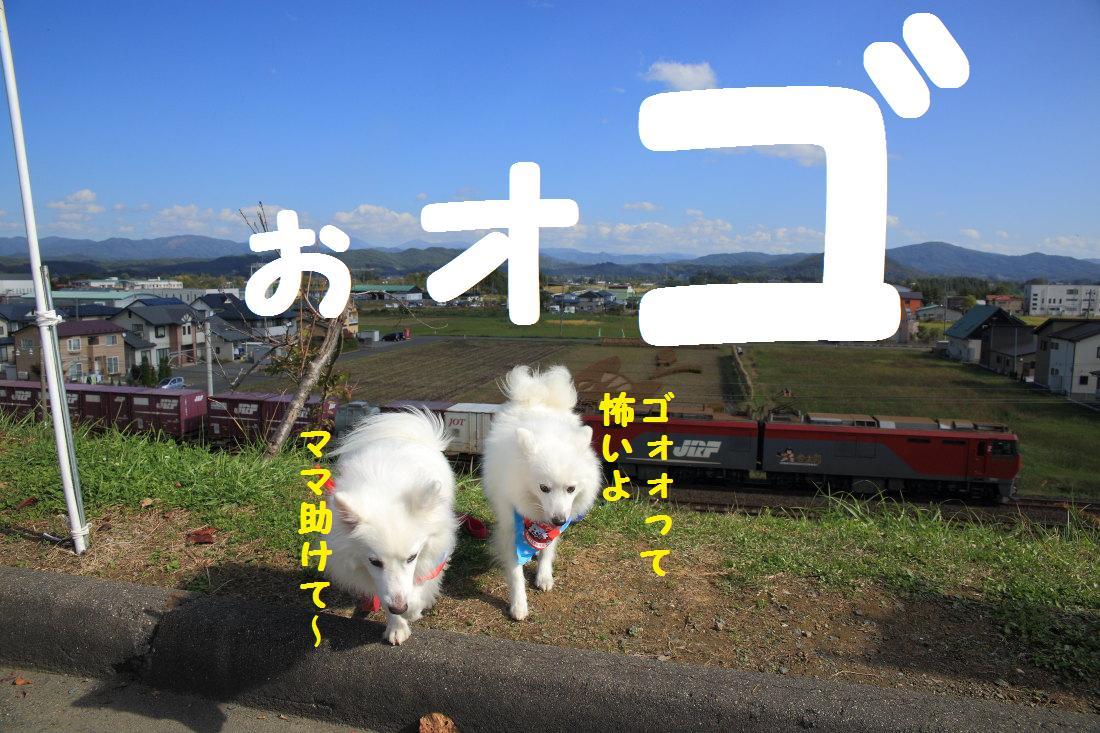 2K5A9333.jpg