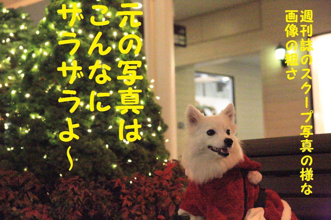 3_20121206124400.jpg