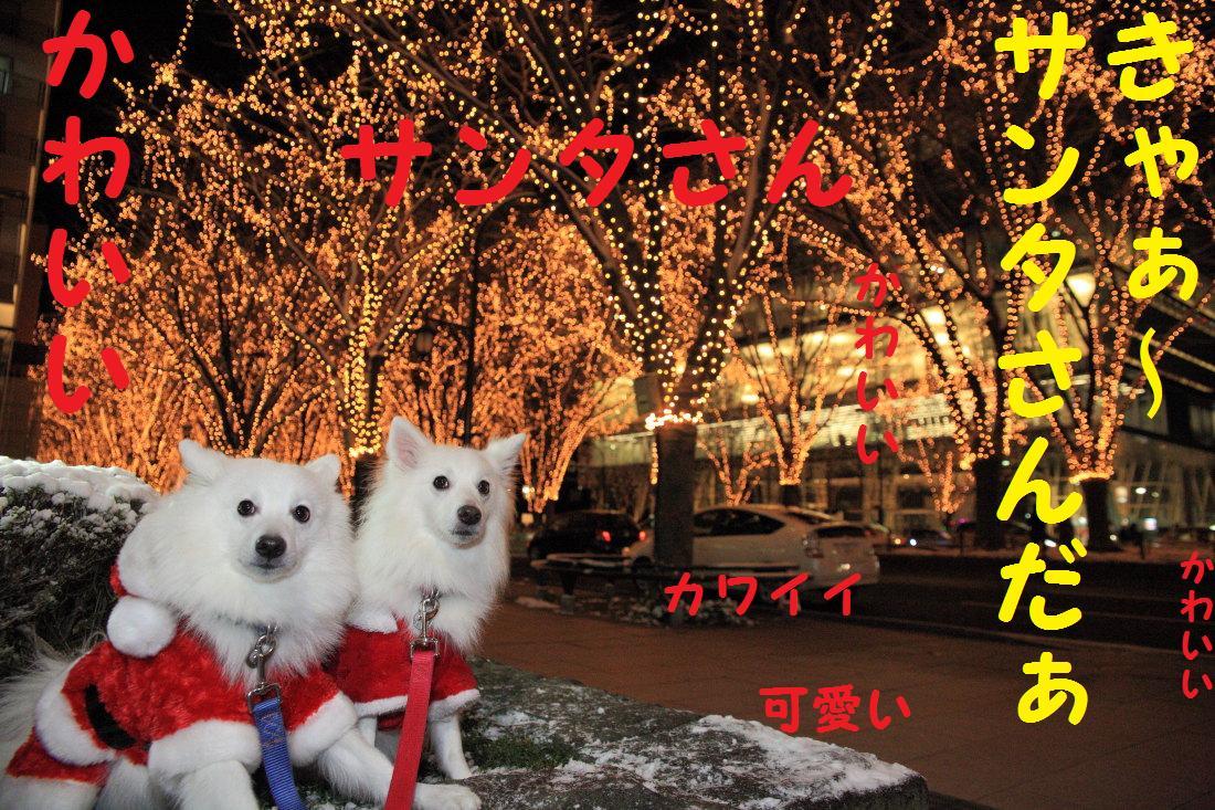 4_20121210102137.jpg