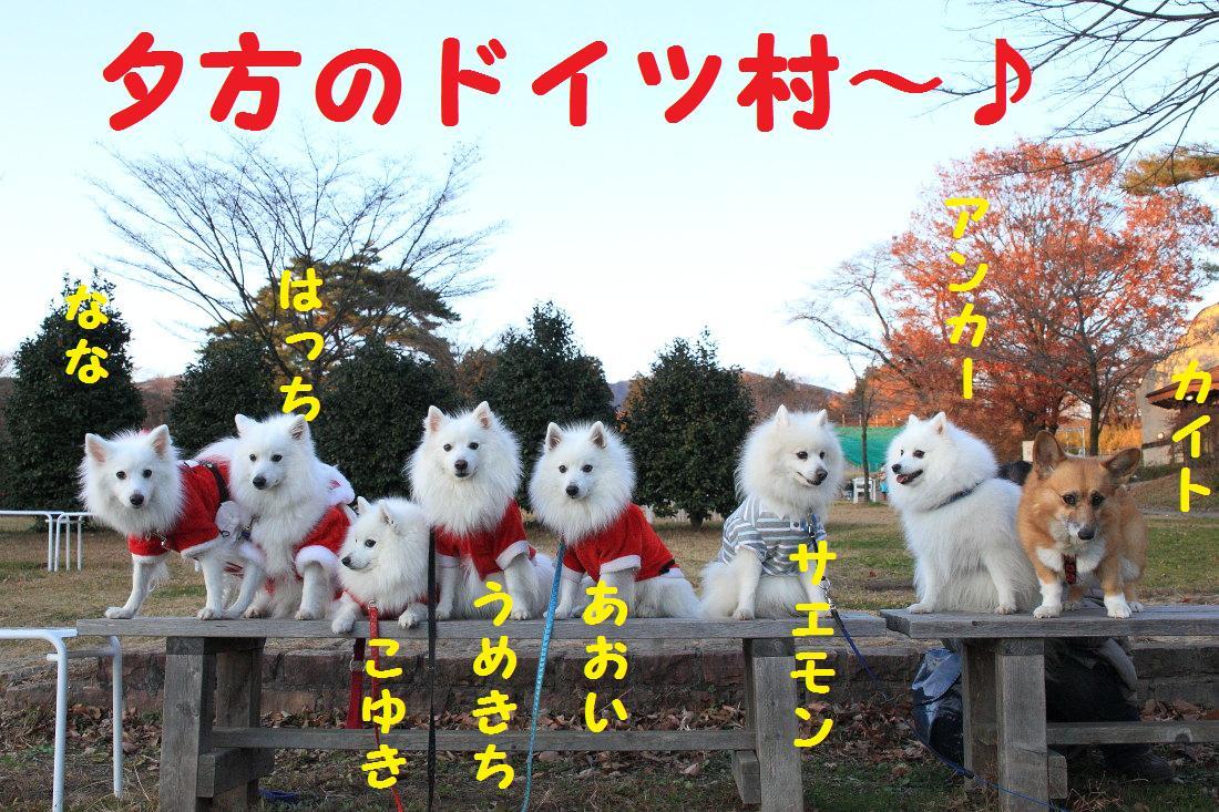 5_20121204135556.jpg