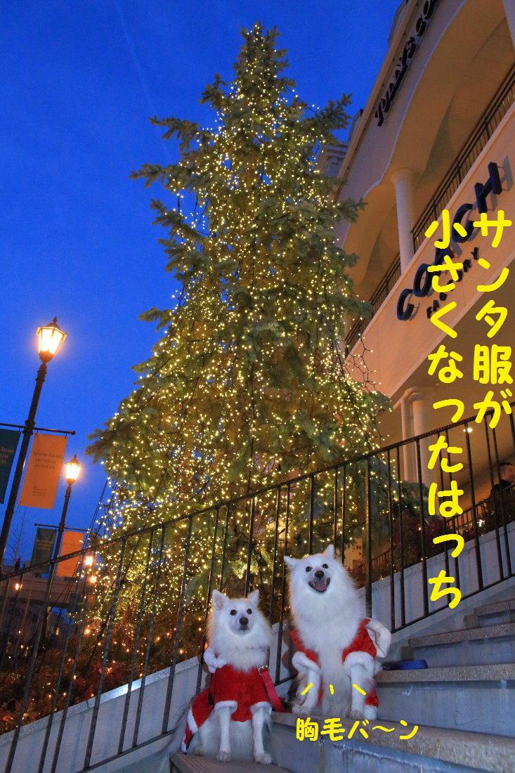 5_20121206124359.jpg