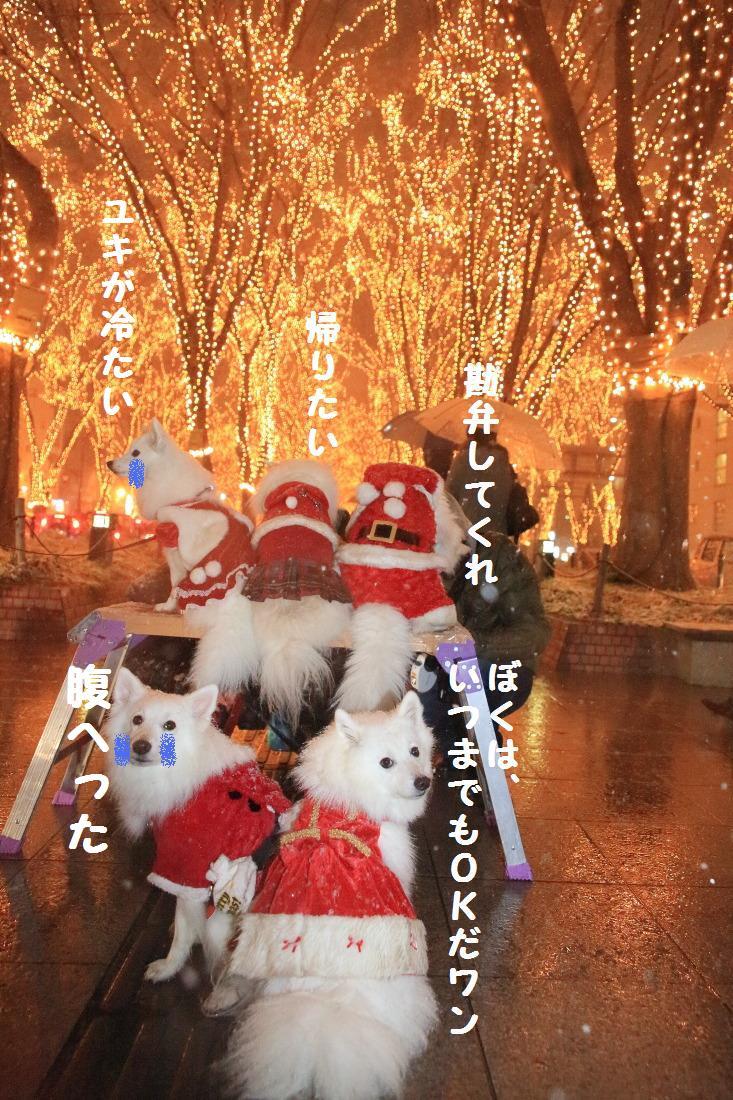 5_20121224194634.jpg
