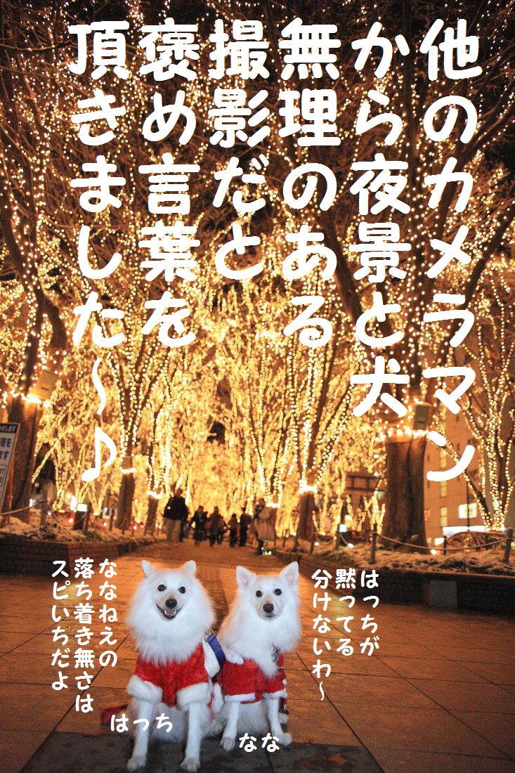 7_20121210102231.jpg