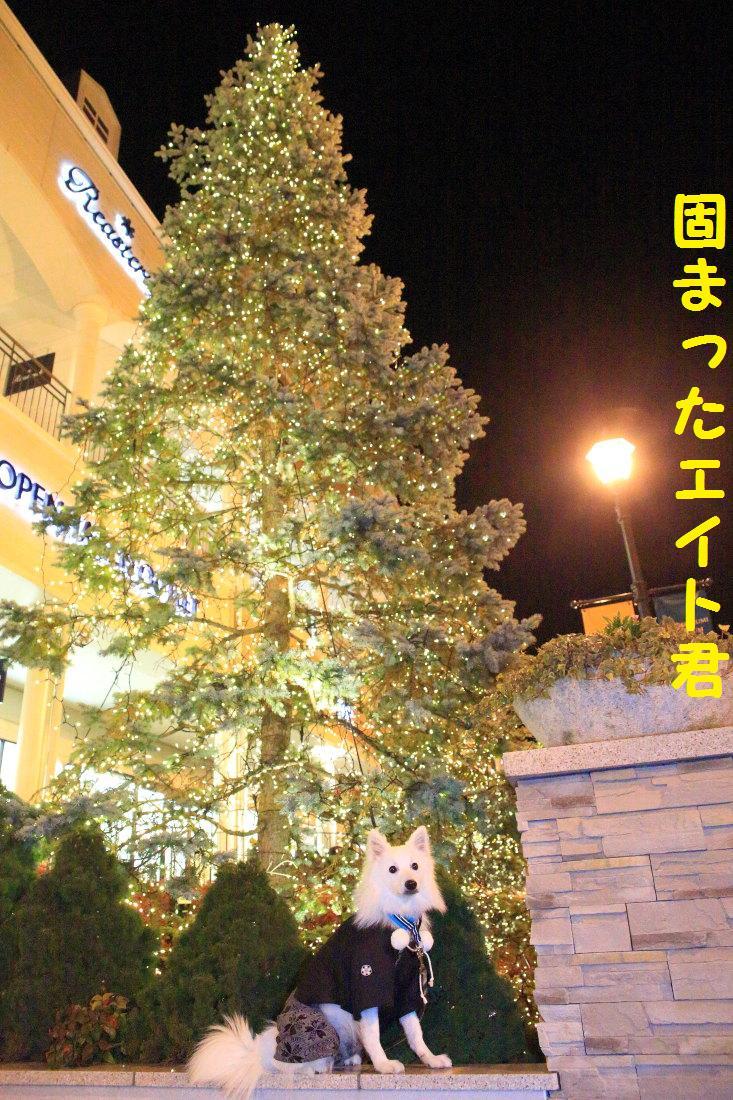 8_20121206124508.jpg