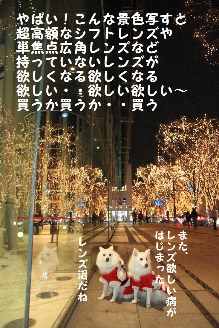 9_20121210102230.jpg