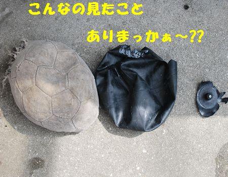 DSC_0010_20120618203543.jpg