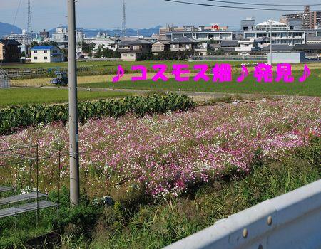 DSC_0015_20121105202358.jpg