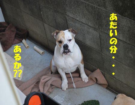 DSC_0016_20120507075820.jpg
