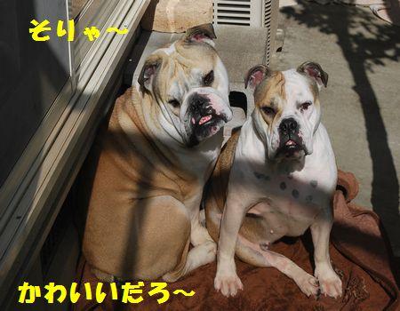 DSC_0019_20121204213451.jpg