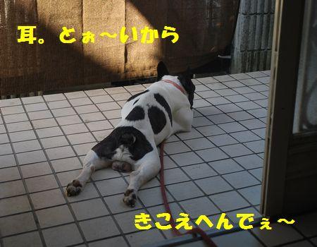 DSC_0030_20120813204620.jpg