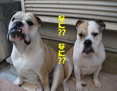 DSC_0035_20120507075311.jpg