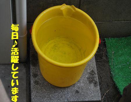 DSC_0078_20120618205257.jpg