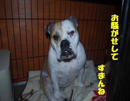 DSC_0084_20121225204953.jpg