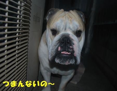 DSC_0097_20121213201016.jpg