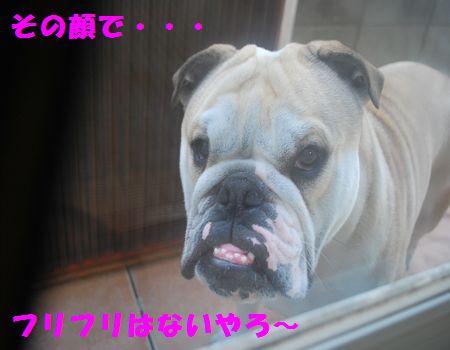 DSC_0099_20120604214004.jpg