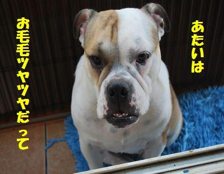 DSC_0101_20120821100042.jpg