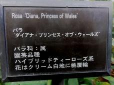 20120601ダイアナ・プリンセス表示