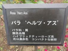 20120601智光山緑化植物園 ヘルツ・アス・プレート