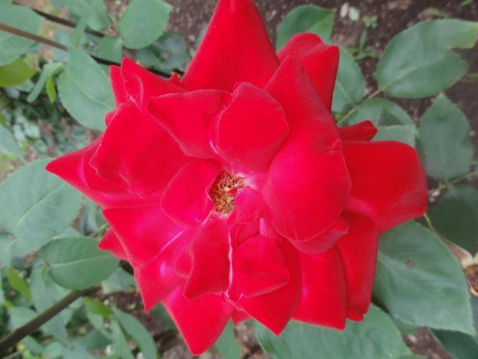 20120601智光山緑化植物園 ヘルツ・アーズB