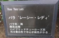 20120601智光山緑化植物園 レーシー・レディ・プレート