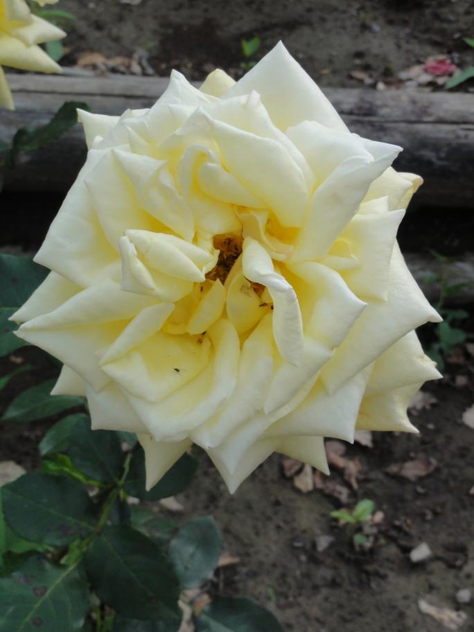 20120601智光山緑化植物園 かぐや姫