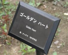 20120601智光山緑化植物園ゴールデン・ハート・プレート