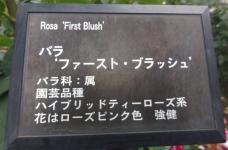 20120601智光山緑化植物園 ファースト・ブラッシュ・プレート