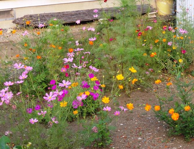 20120716彩りの花