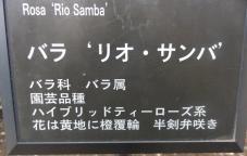 20120601智光山緑化植物園 リオ・サンバ ・プレート