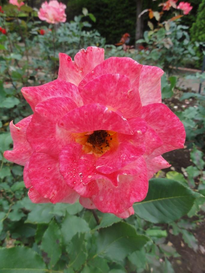 20120601智光山緑化植物園 リオ・サンバ