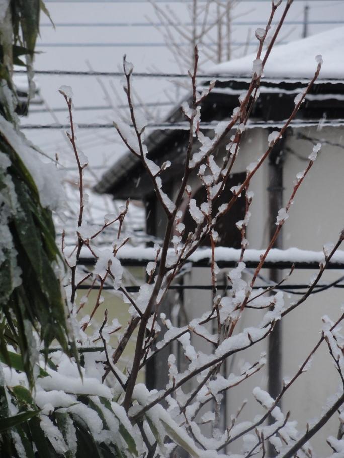 20130114初雪