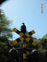 4.27 三岐鉄道 002