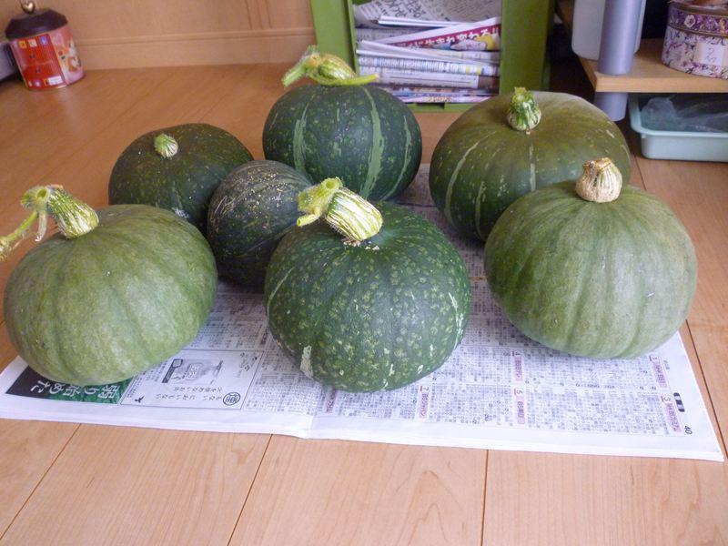 かぼちゃの収穫