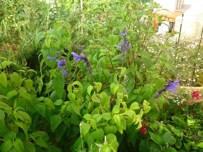 ガーデンの花