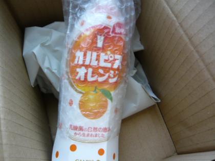 「カルピス」オレンジ