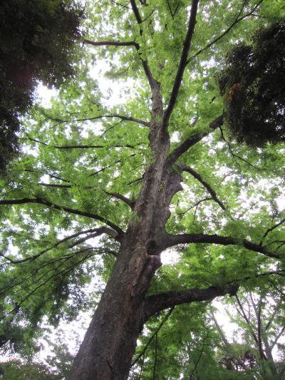 神霊が宿る鎮守の森…大きな大きな木立