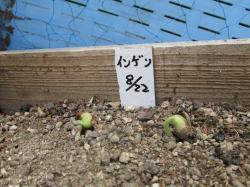 豌エ閠墓ス蝓ケ縺ィ縺昴i蜷・77+002_convert_20120826115225