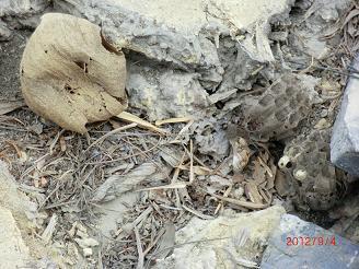 屋根蜂の巣1