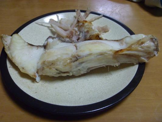 鯛IMG0006